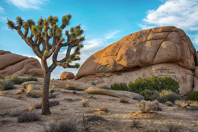 Photograph - Joshua Tree And Rocks At Sunset by Dave Dilli