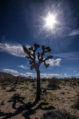 Photograph - Joshua Tree And Sunshine by Randall Nyhof