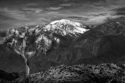 Art Print featuring the photograph Joshua Tree At Keys View In Black And White by Randall Nyhof