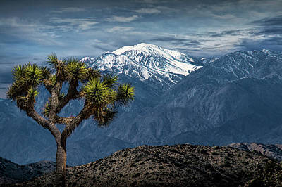 Art Print featuring the photograph Joshua Tree At Keys View In Joshua Park National Park by Randall Nyhof