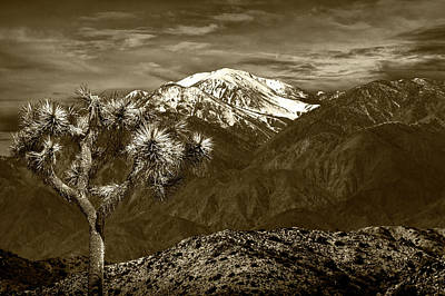 Art Print featuring the photograph Joshua Tree At Keys View In Sepia Tone by Randall Nyhof