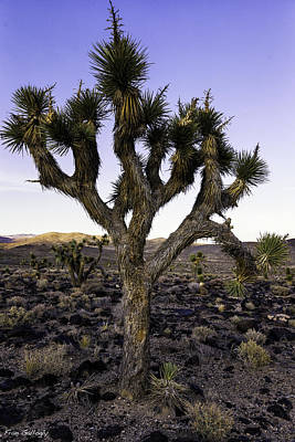 Photograph - Joshua Tree At Lee Flat by Fran Gallogly