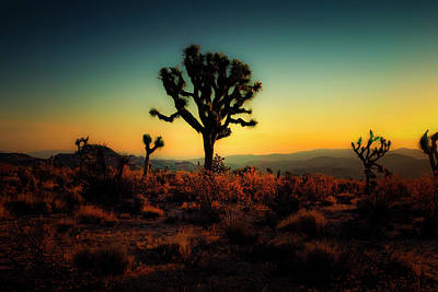 Photograph - Joshua Tree At Sunrise Series 9190456 by Sandra Selle Rodriguez