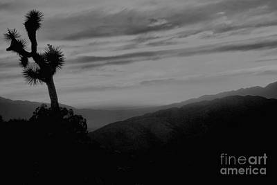 Photograph - Joshua Tree Black And White by Adam Jewell