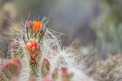 Photograph - Joshua Tree Cactus And Flower by Peter Tellone