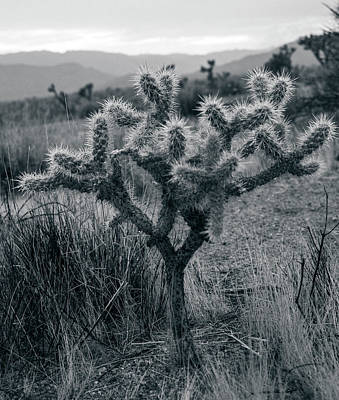 Photograph - Joshua Tree Cactus by Smoked Cactus