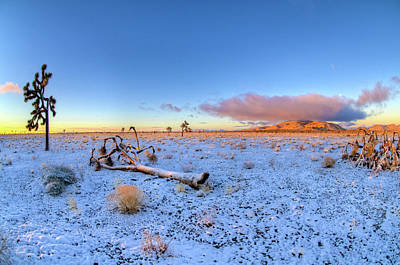 Photograph - Joshua Tree Desert Sunrise In Snow by Connie Cooper-Edwards