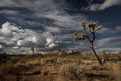 Photograph - Joshua Tree Fantasy by Tod Colbert