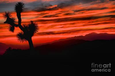 Photograph - Joshua Tree Fiery Sunset by Adam Jewell
