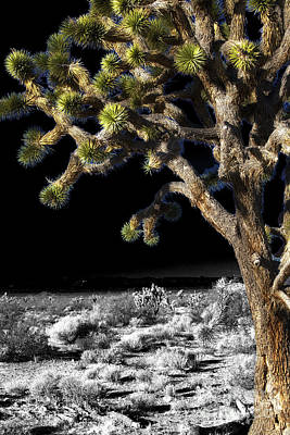Photograph - Joshua Tree Fusion by John Rizzuto