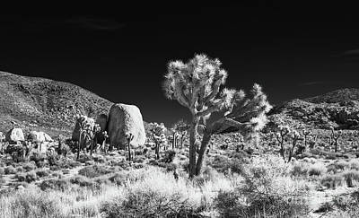 Photograph - Joshua Tree Grove by Blake Webster