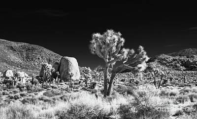 Photograph - Joshua Tree Grove by Blake Webster