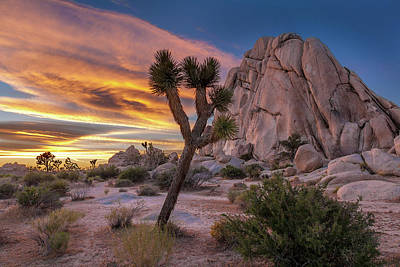 Intersection Photograph - Joshua Tree Hidden Valley by Peter Tellone