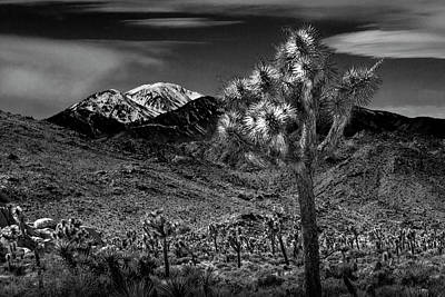 Photograph - Joshua Tree In Black And White In Joshua Park National Park With The Little San Bernardino Mountains by Randall Nyhof