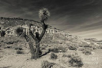 Photograph - Joshua Tree In Hagen Canyon by Jeffrey Hubbard
