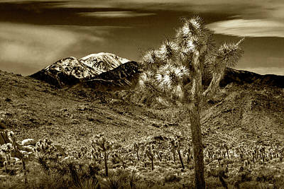 Photograph - Joshua Tree In Sepia Tone By The Little San Bernardino Mountains by Randall Nyhof