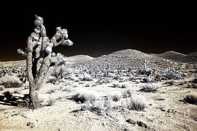 Photograph - Joshua Tree In The Desert by John Rizzuto