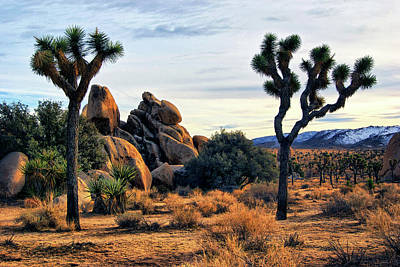 Photograph - Joshua Tree In Winter by Sandra Selle Rodriguez