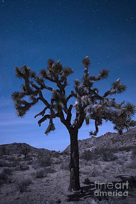 Twinkle Photograph - Joshua Tree by Juli Scalzi