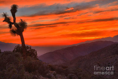 Photograph - Joshua Tree Keys View Sunset by Adam Jewell