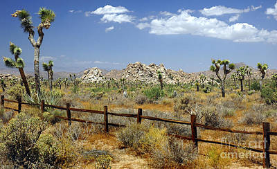 Photograph - Joshua Tree Landscape by Jon Holiday