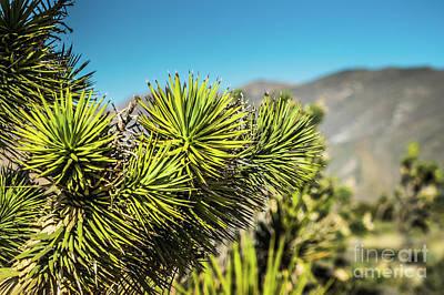 Photograph - Joshua Tree Las Vegas #1 by Blake Webster