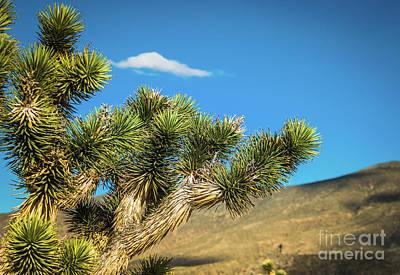 Photograph - Joshua Tree Las Vegas #2 by Blake Webster