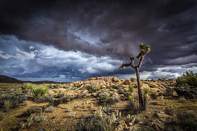 Photograph - Joshua Tree Light by Peter Tellone