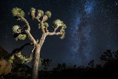 Joshua Tree Photograph - Joshua Tree Milky Way by Casey Kiernan