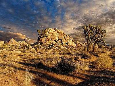 Photograph - Joshua Tree National Park 2 by Glenn McCarthy Art and Photography