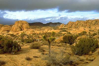 Joshua Tree National Park California - Landscape Art Print