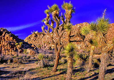 Photograph - Joshua Tree National Park by Gary Corbett