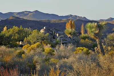 Joshua Tree National Park In California Art Print