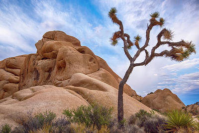 Photograph - Joshua Tree National Park Landscape 2 by Dave Dilli