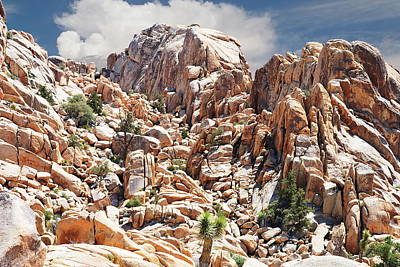 Photograph - Joshua Tree National Park - Natural Monument by Glenn McCarthy Art and Photography