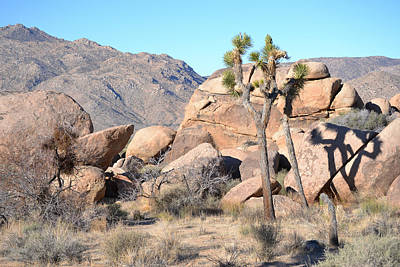 Photograph - Joshua Tree National Park - Rocks And Tree by rd Erickson