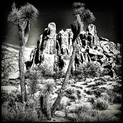 Photograph - Joshua Tree National Park by Roger Passman