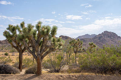 Photograph - Joshua Tree National Park by Ross G Strachan
