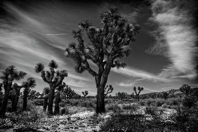 Photograph - Joshua Trees Series 9190678 by Sandra Selle Rodriguez