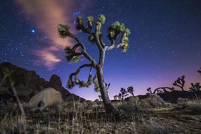 Joshua Tree Photograph - Joshua Tree Night by Casey Kiernan