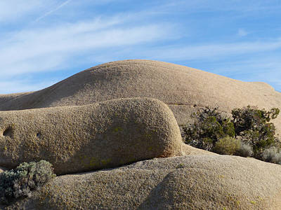 Photograph - Joshua Tree National Park 16 by Jeff Brunton