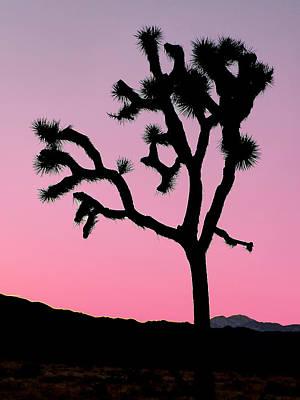 Photograph - Joshua Tree National Park 66 by Jeff Brunton