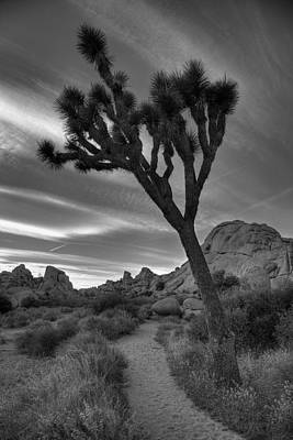 Joshua Tree Np Photograph - Joshua Tree Path by Peter Tellone