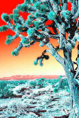 Photograph - Joshua Tree Pop Art by John Rizzuto