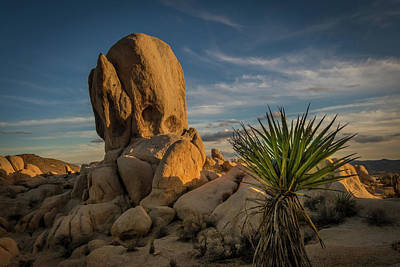 Photograph - Joshua Tree Rock Formation by Ed Clark