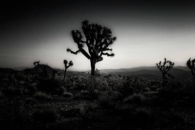 Photograph - Joshua Tree Series 9190456 by Sandra Selle Rodriguez