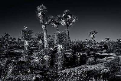 Photograph - Joshua Tree Series 9190509 by Sandra Selle Rodriguez