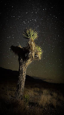 Antique Maps - Joshua Tree Starred by Allen Biedrzycki