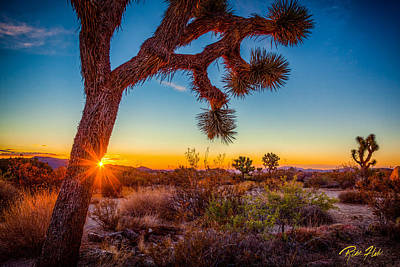 Photograph - Joshua Tree Sun Peek by Rikk Flohr