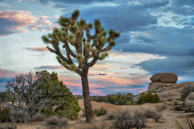 Photograph - Joshua Tree Sunrise by Dave Dilli
